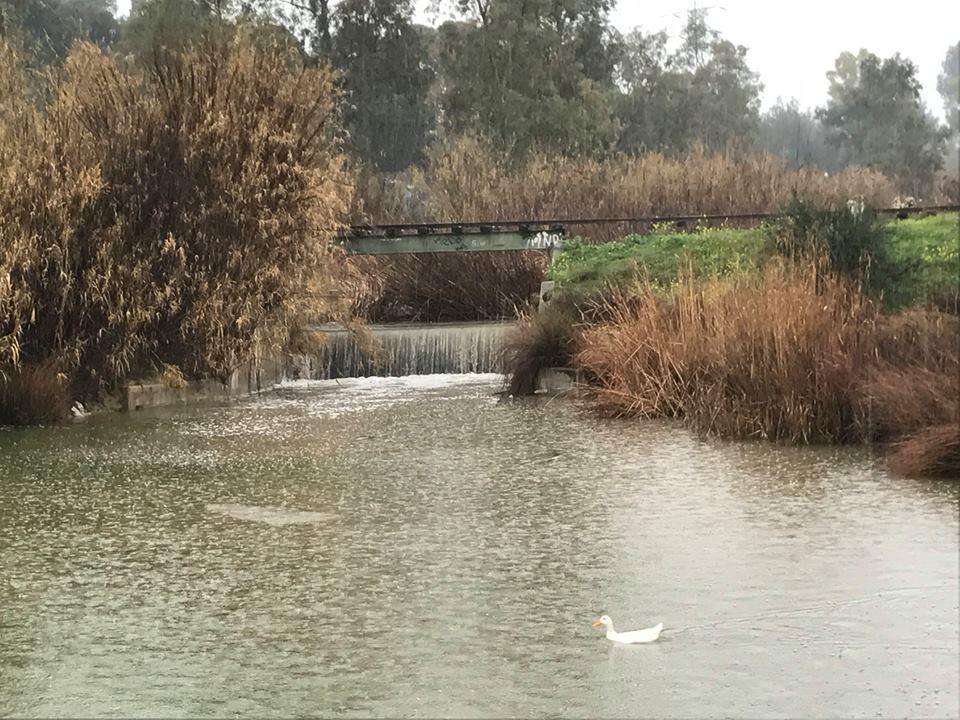 """Ημερίδα στο Πάρκο """"Αντ.Τρίτσης"""" για τη διαχείριση των υδάτων την Τετάρτη 15/11"""