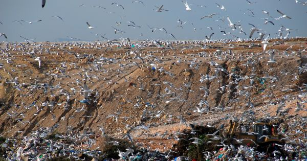 Tα λεφτόδεντρα των σκουπιδιών